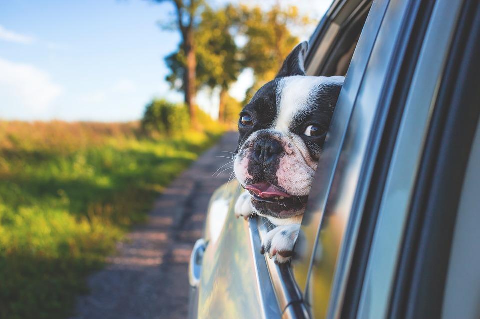 Kakvu muziku slušate dok vozite – brzu, sporu ili vam nije važno?