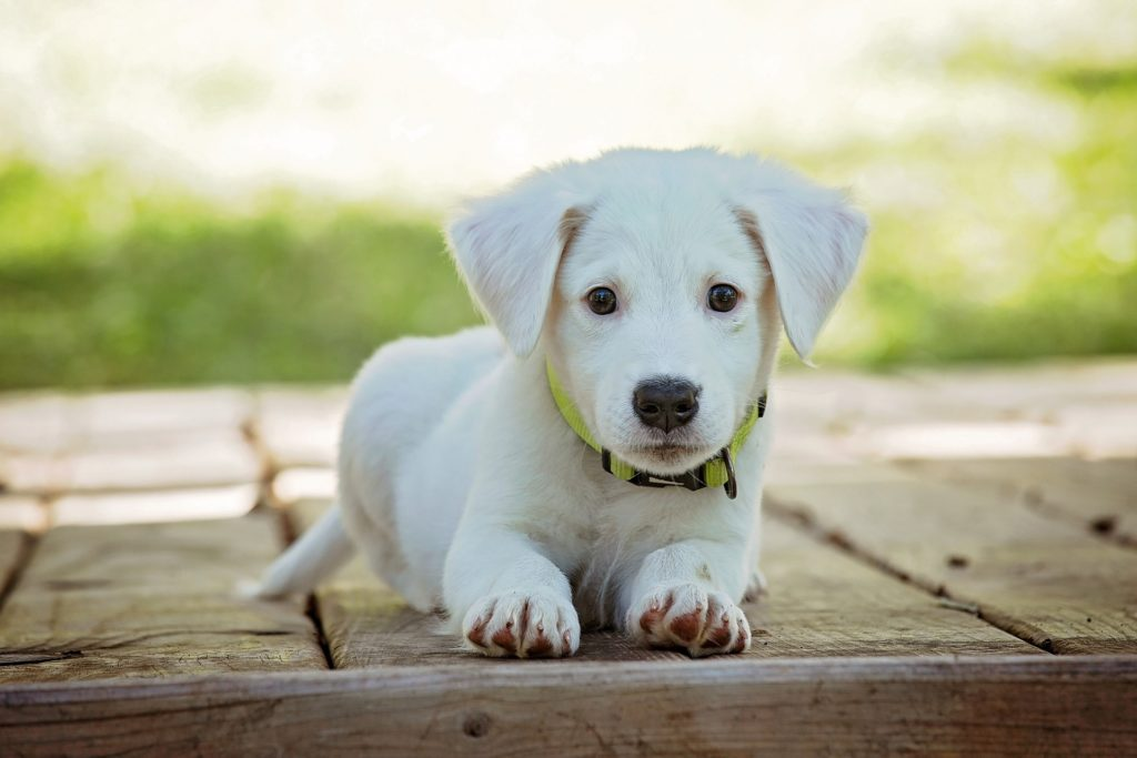 Psi poboljšavaju fizičko i psihičko mentalno stanje vlasnika