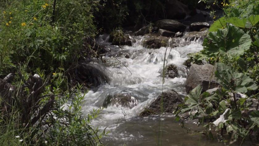 Rakita, Foto: MRCN