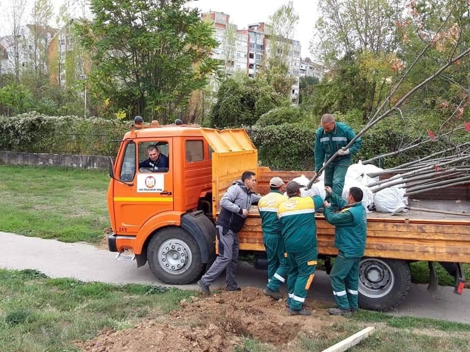 """Akcija sadnje stabala. Sadnice doniraju preduzeća Foto: JKP """"Mediana"""" Niš"""