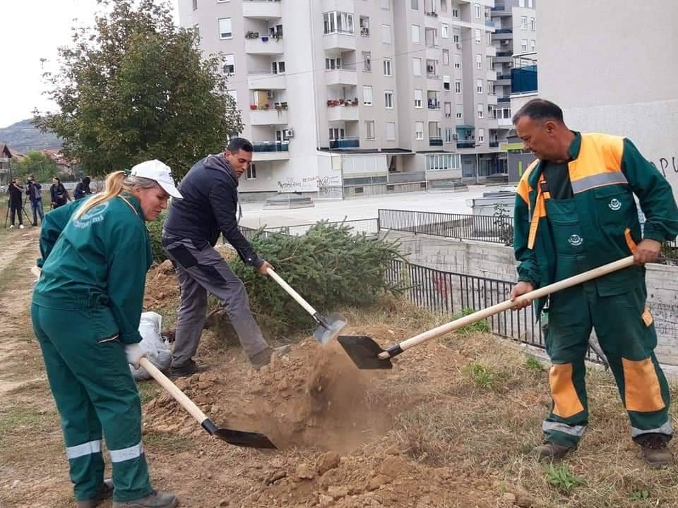 """Neka Niš diše: Akcija sadnje 170 stabala za četiri dana; Foto: JKP """"Mediana"""" Niš"""