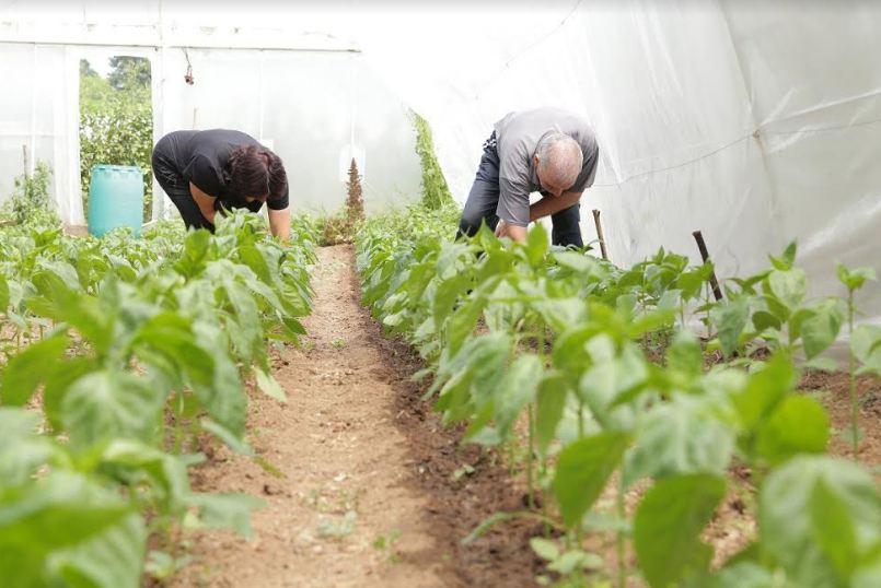 Vredne žene iz Babušnice planiraju da prošire proizvodnju, da zaposle još žena u uzgoju voća kao i da njihovi proizvodi postanu prepoznatljivi na tržištu
