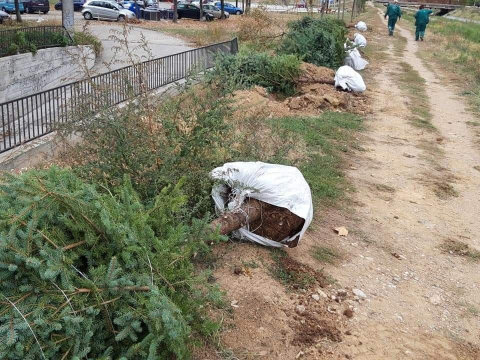 "Nova stabla za čistiji vazduh; Foto: JKP ""Mediana"" Niš"