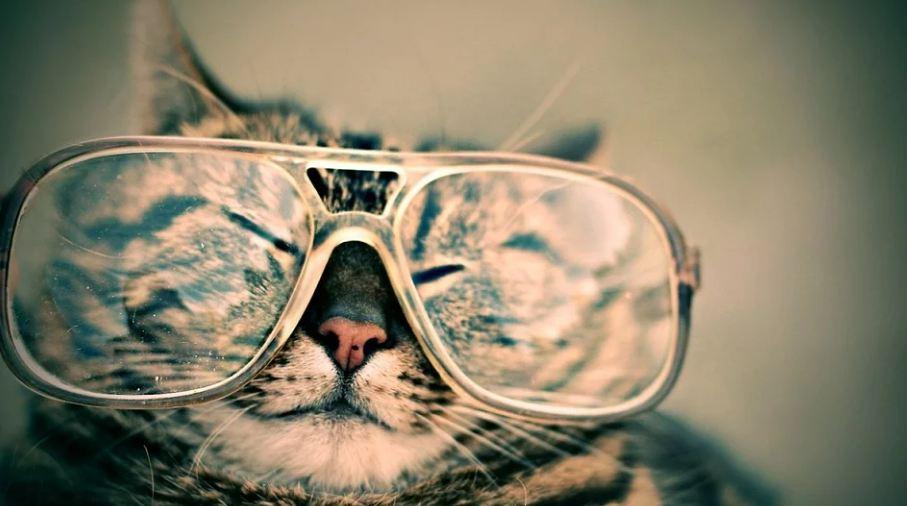 Povedite mačku na posao
