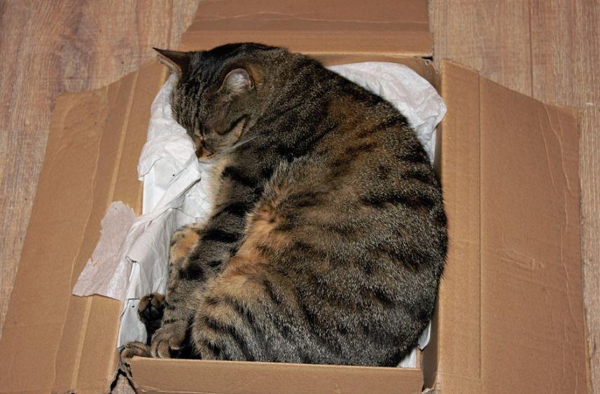 Objašnjeno zašto mačke vole da se zavlače u kutije